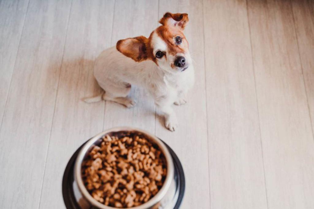Comida saludable para tus mascotas