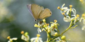 Neem y mariposa