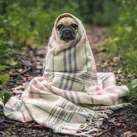 Perro_animales domestico